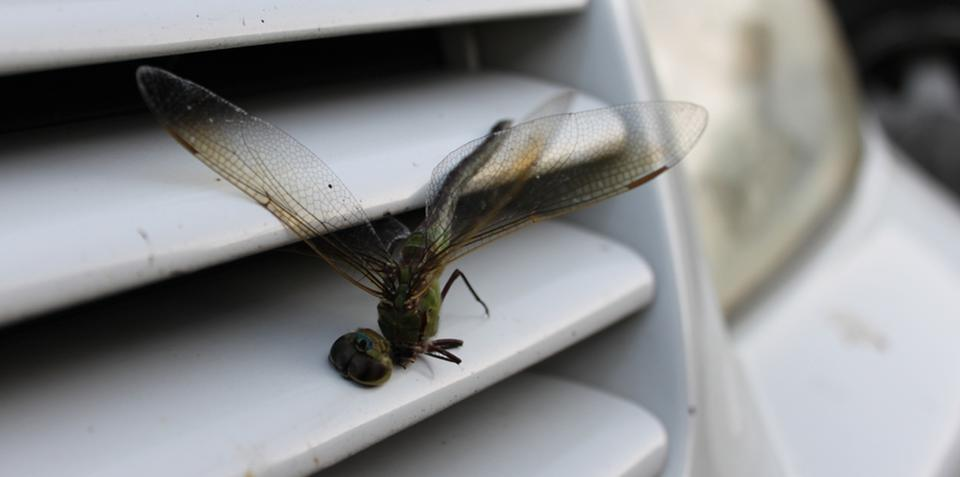 Cars kill trillions of bugs in Australia every year