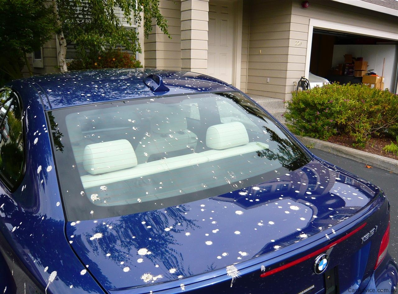 Diy Bird Poo Paint Damage Explained How To Protect Your