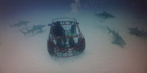 Volkswagen Beetle goes swimming with sharks