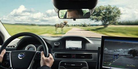 Volvo Animal Detection: local testing planned for kangaroo-spotting tech